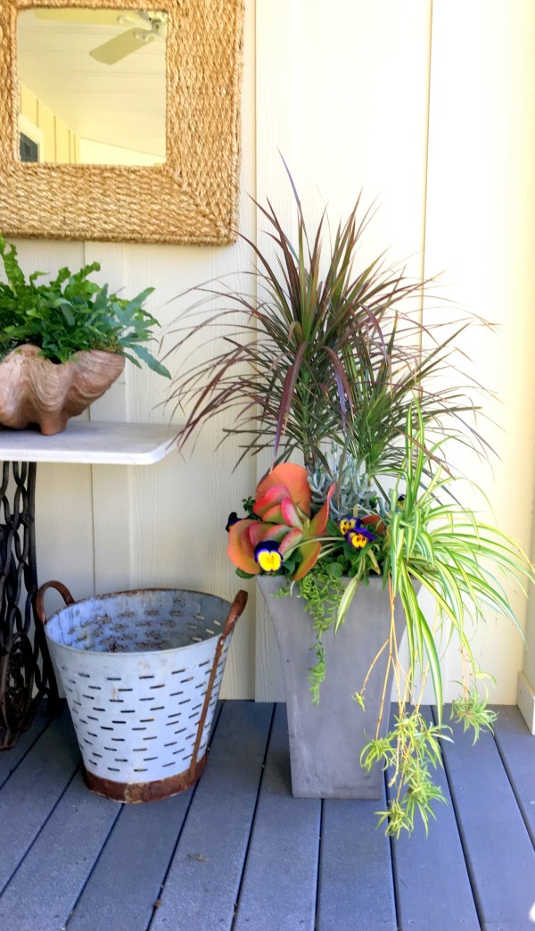 Dracaena, Spider Plant, Succulents, and Pansies