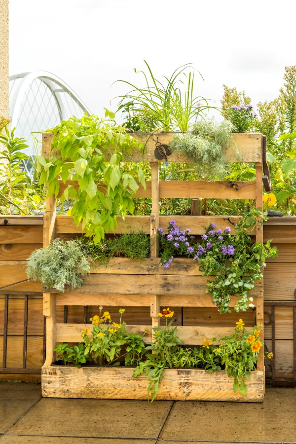 Indoors or out, a pallet planter is a vertical organizer for all kinds of greenery.
