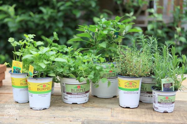 Burpee Home Gardens Herbs
