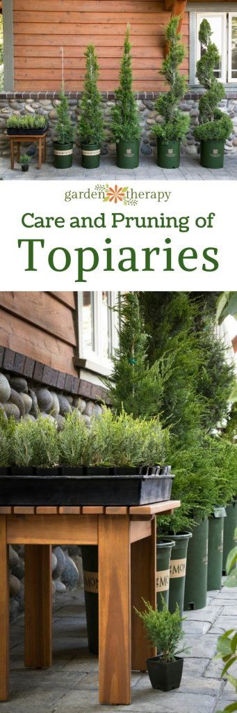 Care and Pruning Advice for Decorative Topiaries