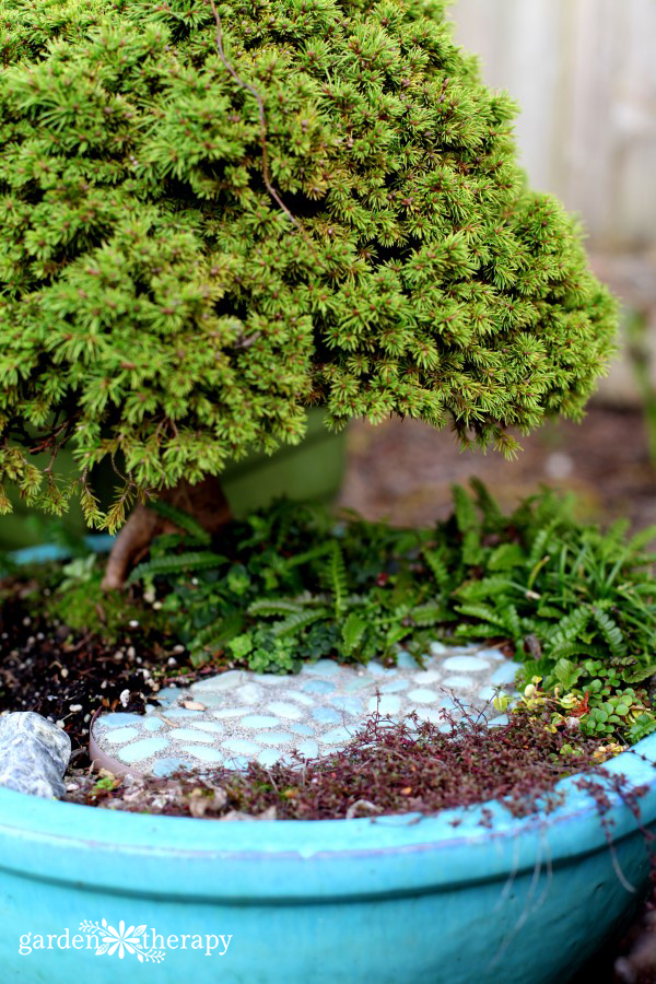 Gardening in Miniature Cover Project