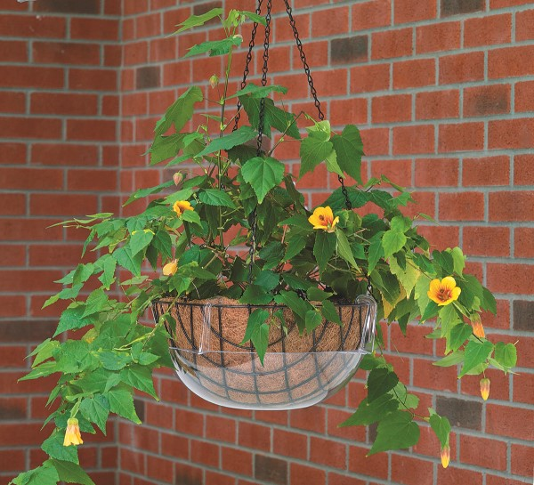 Hanging Basket Tray