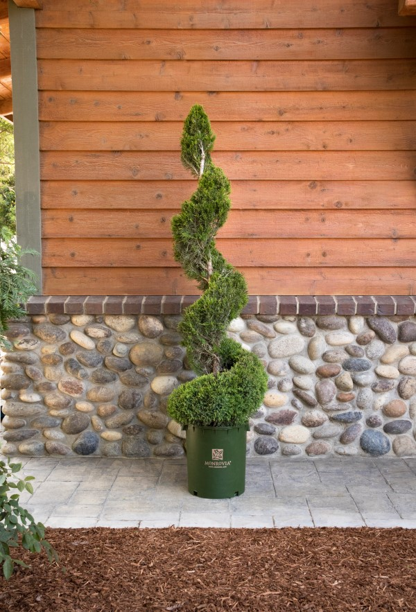 Garden Therapy Different Garden Ideas: Care And Pruning For Decorative Topiaries