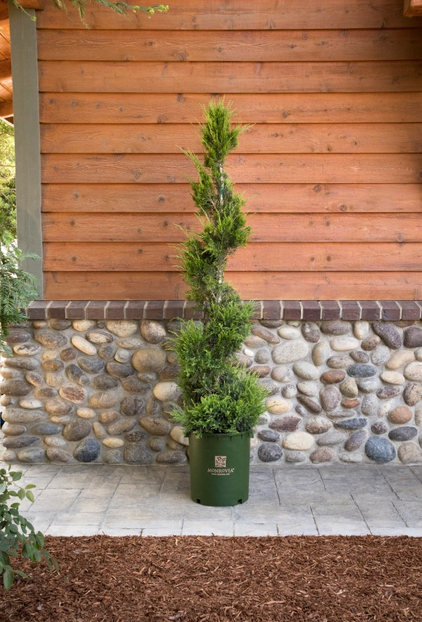 Care And Pruning For Decorative Topiaries Garden Therapy