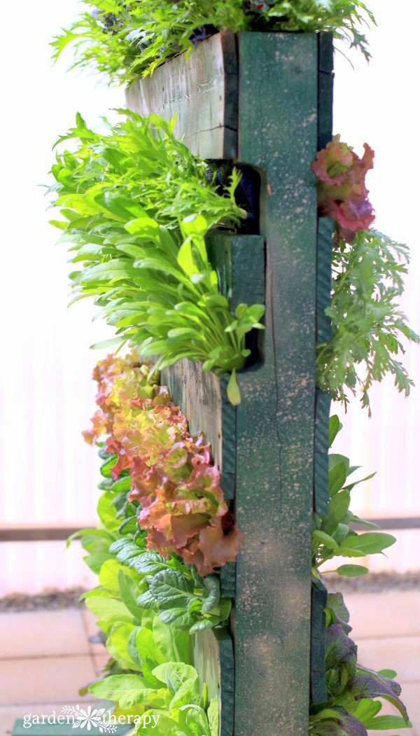 Edible Pallet Planter with Lettuces