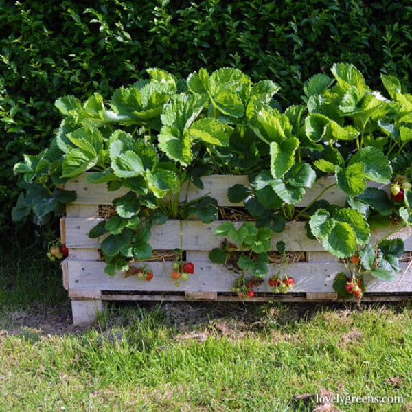 Lovely Greens Strawberry Pallet Planter