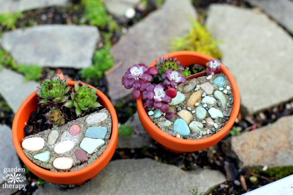 Magical Miniature Gardens (Tiny Succulent Pots)