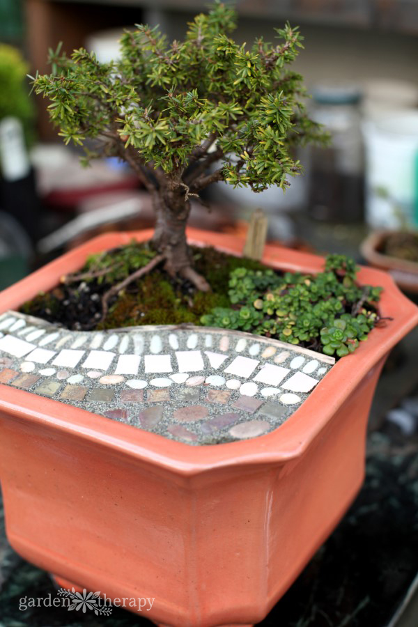 Magical Miniature Gardens Patio Pot