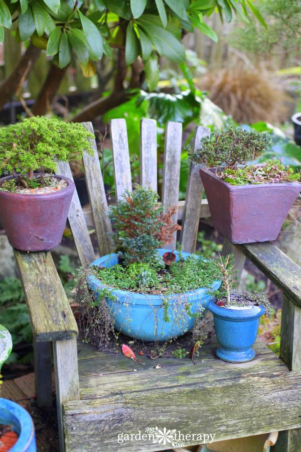Overwintering Miniature Gardens
