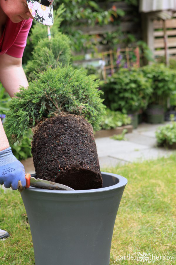 Planting a Topiary