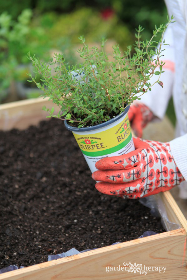 Planting a Wine Box Herb Garden