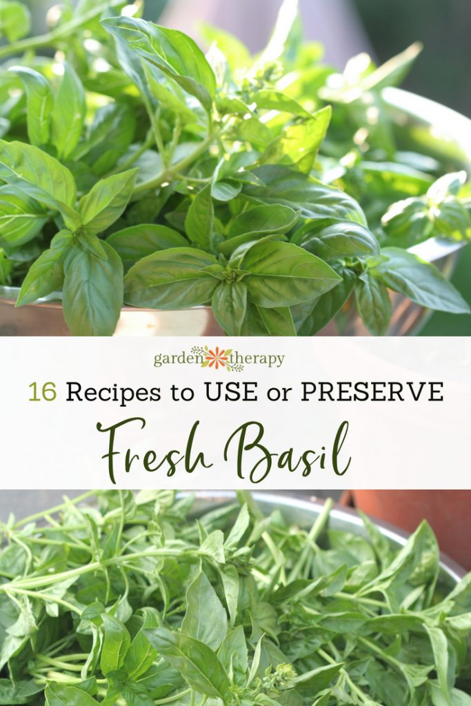 16 Recipes to Use and Preserve Fresh Basil