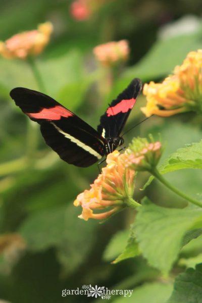 Pretty Pollinators: Create a Butterfly Garden