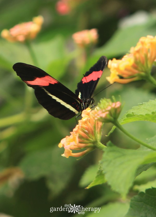 Pretty Pollinators: Create a Butterfly Garden