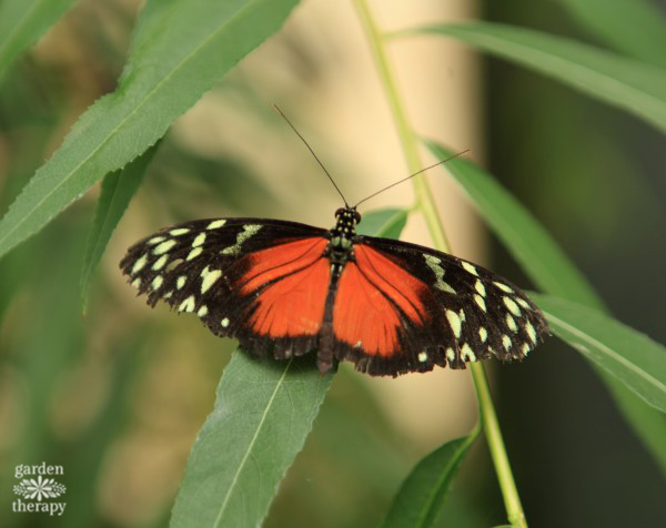 Butterfly on leaf in a therapy garden