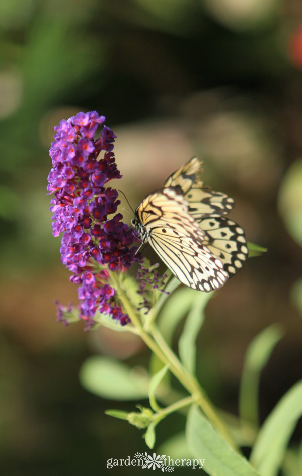 Butterfly pollinating a plant