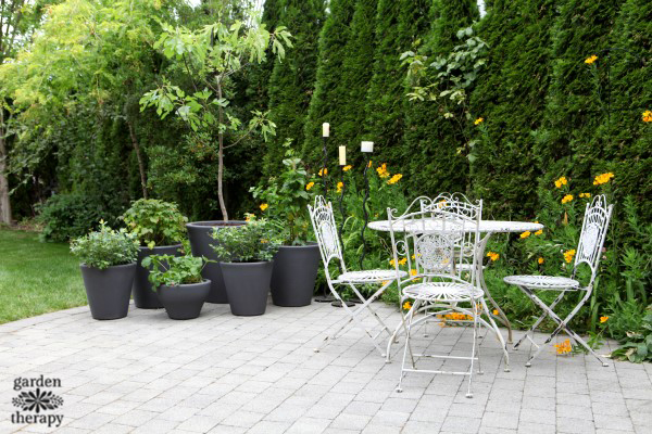 Grow a patio fruit garden