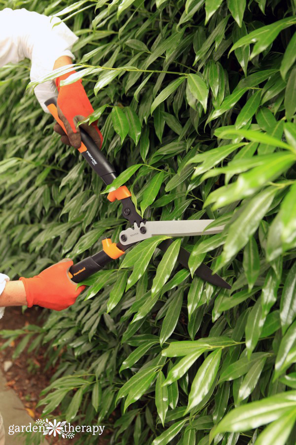 hedge pruning tips and tricks