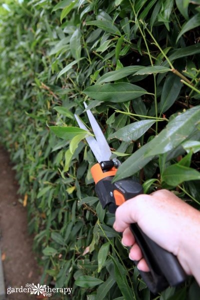 hedge pruning 101