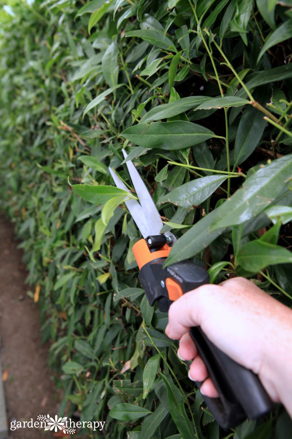 Garden Therapy Different Garden Ideas: Your Guide To Pruning Hedges