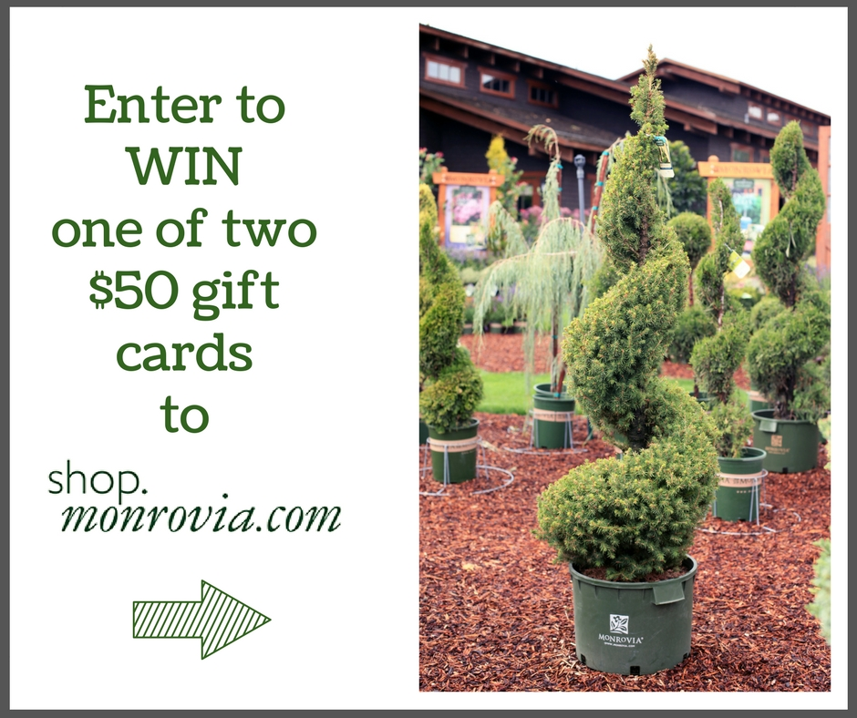 Care And Pruning For Decorative Topiaries Giveaway