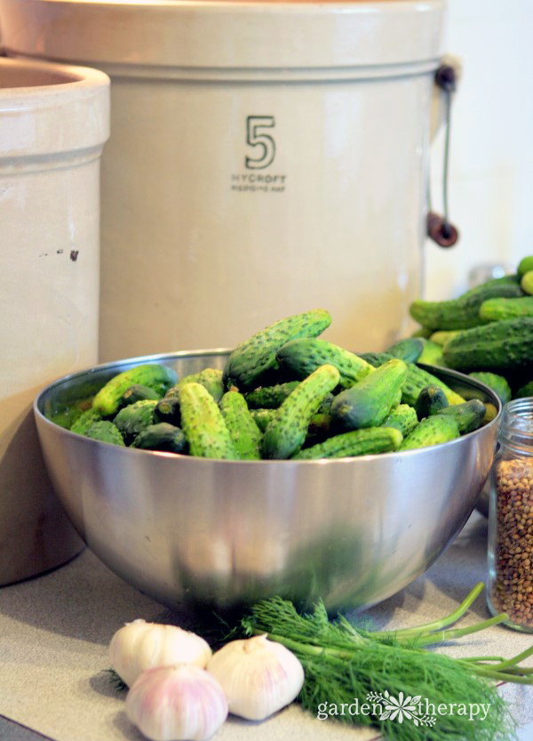 Old Fashioned Deli-Style Sour Pickles