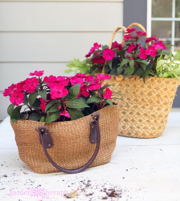 Planting SunPatiens in Purses