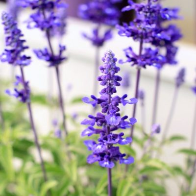 Heat-Tolerant Plants that Love the Sun