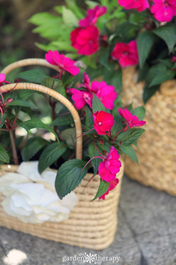 SunPatiens in a straw purse planter