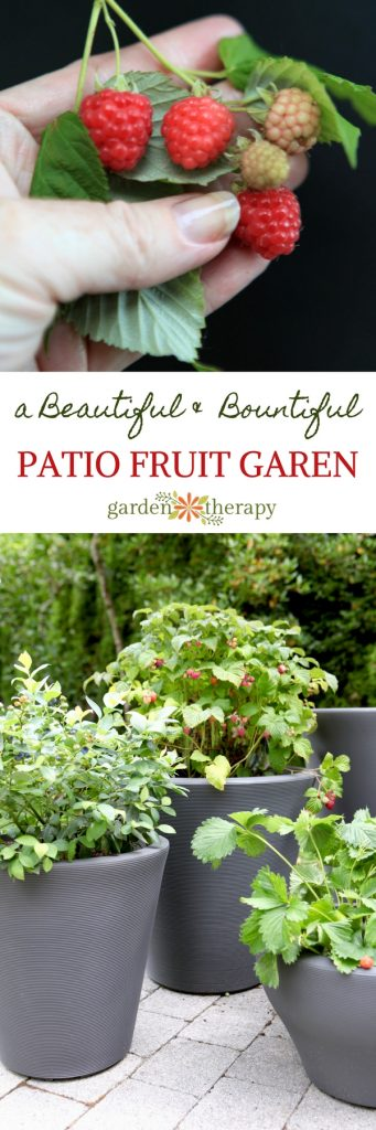 Patio Fruit -Sweet Edibles You Can Grow as a Container Garden