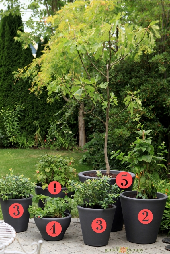 Patio Fruit You Can Grow in Containers