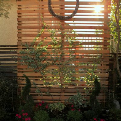 A DIY Espalier Privacy Screen for the Backyard