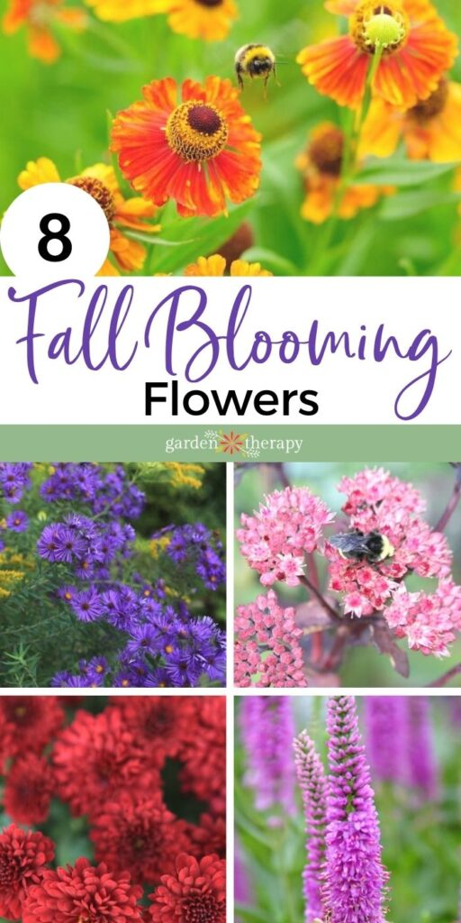 colorful fall-blooming flowers to plant