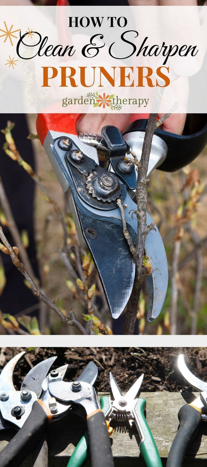 How to care for pruners