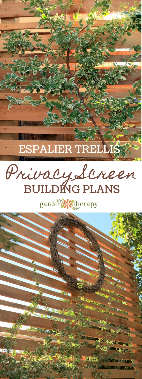 Privacy Screen Espalier Trellis