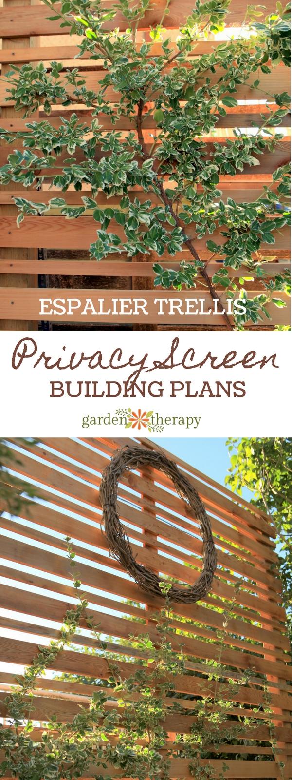 a diy espalier privacy screen for the backyard garden therapy