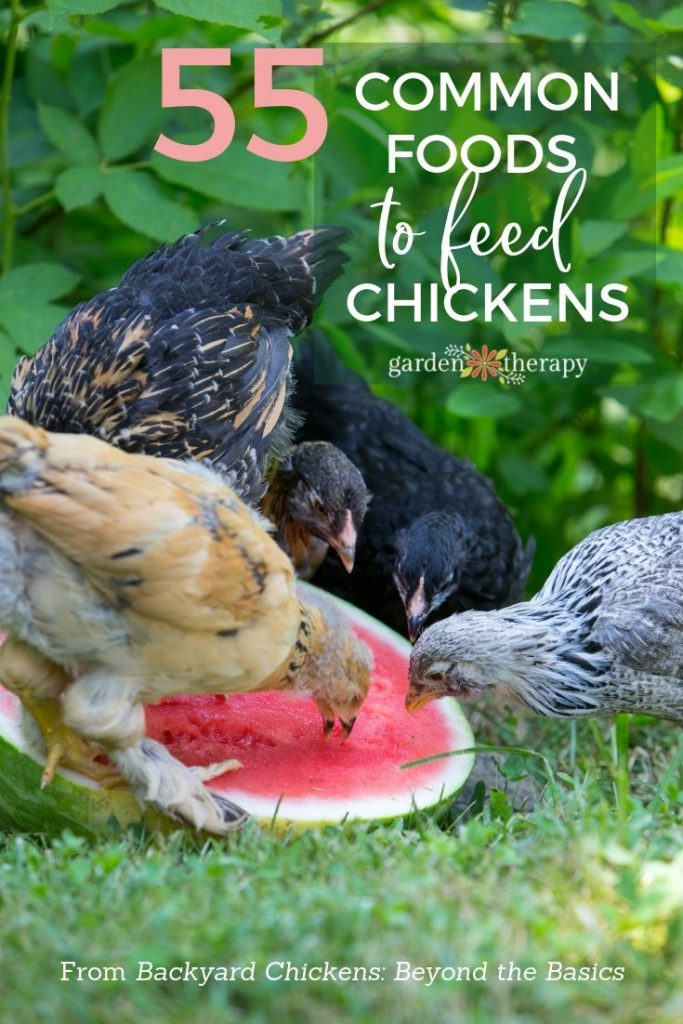 Feeding Hens with Kitchen Scraps