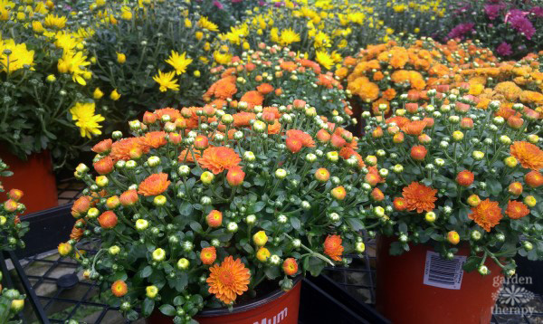 Keep Your Fall Flowers Blooming all Season with this ...