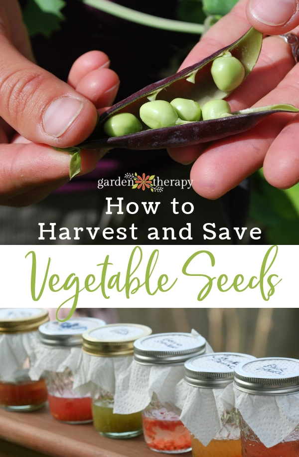 How to Harvest and Save Vegetable Seeds