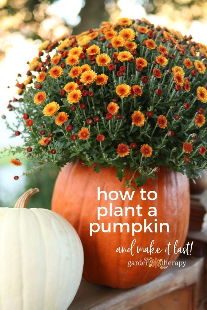 How to Make Planted Pumpkins Last