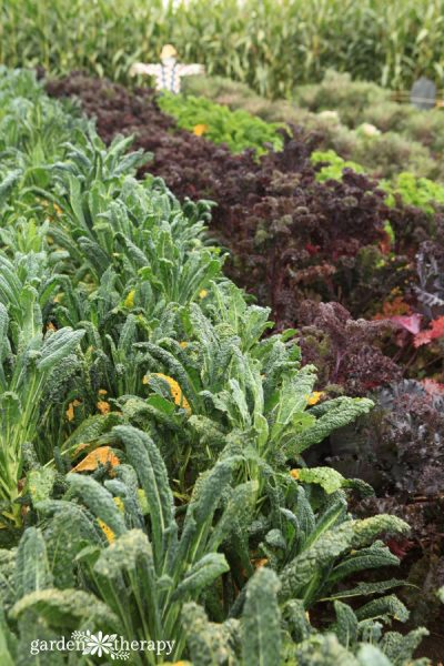 Some vegetables taste sweeter after the first frost of the season