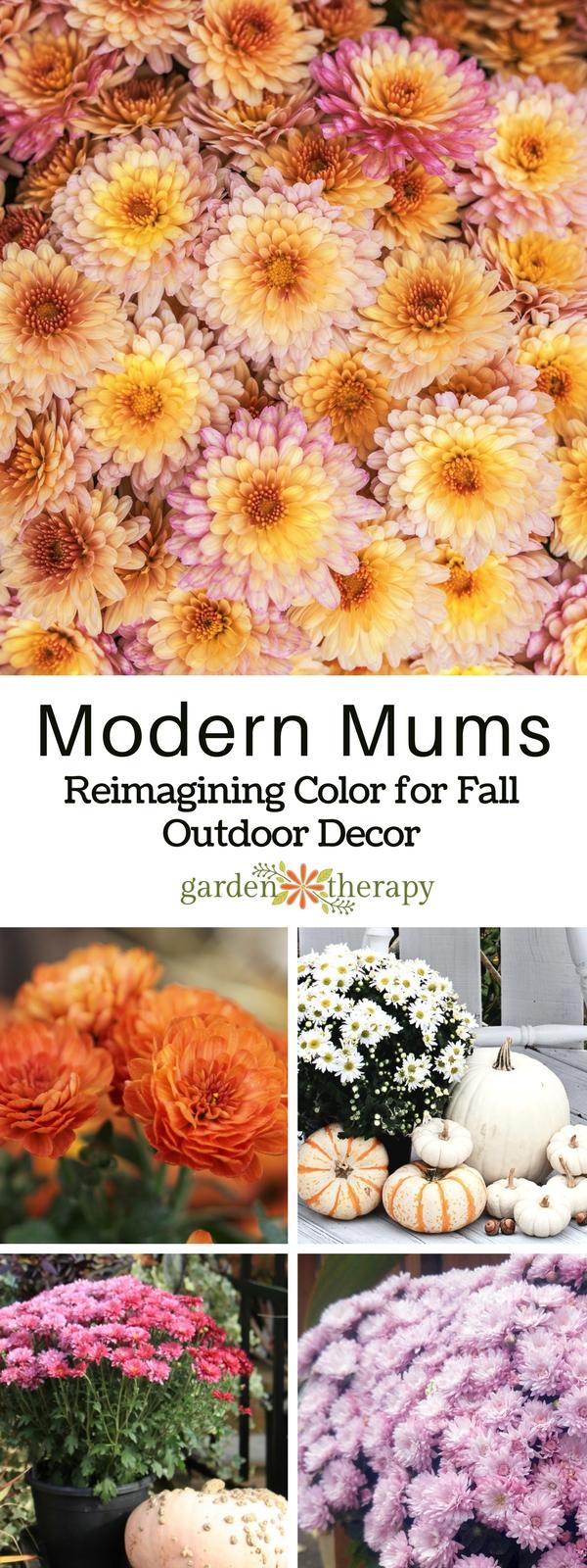 Modern Chrysanthemums