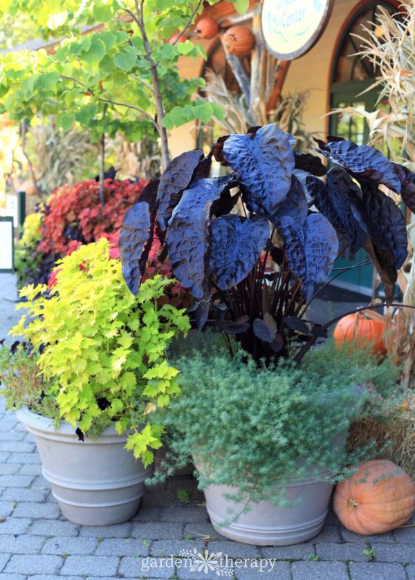 The New York Botanical Garden in the Fifth Season - Garden Therapy
