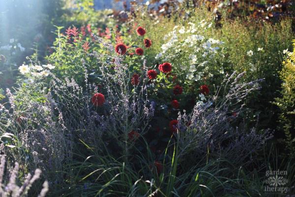 NYBG Tour: Perennial Garden