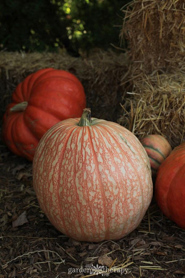 Pumpkins next to hay