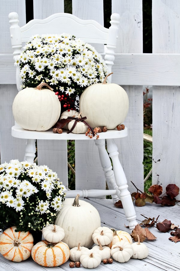 White fall decorating with pumpkins and hardy mums