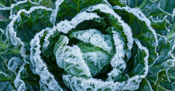 These veggies taste better after the frost hits