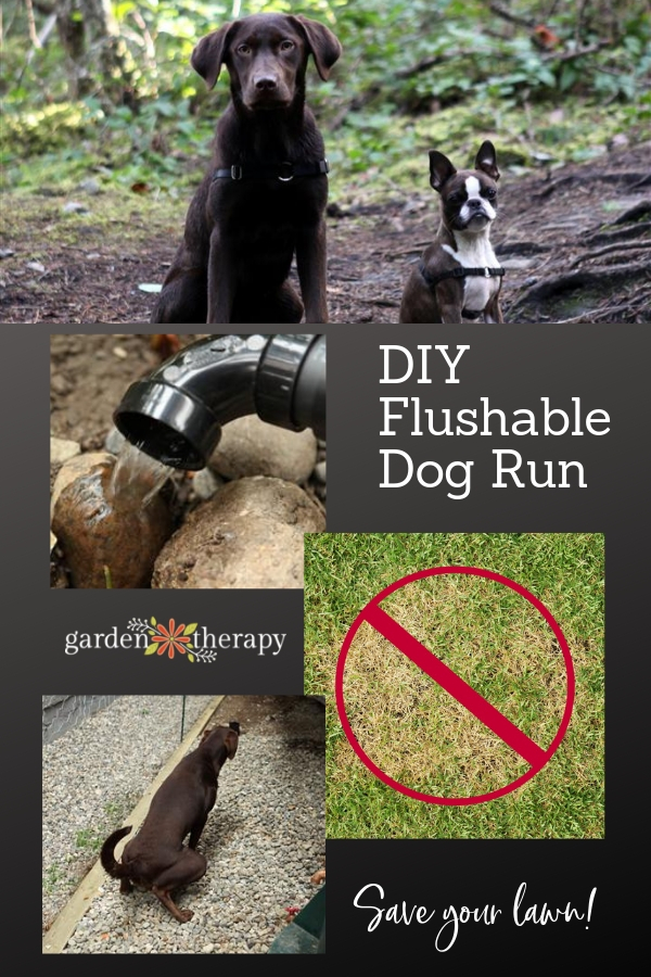 Build a DIY Flushable Dog Run and Save Your Lawn!