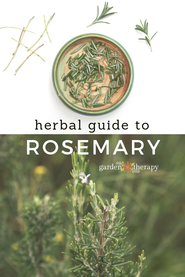 Herbal Guide to Rosemary How to grow, harvest and use rosemary for healing