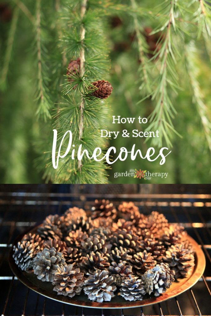 How to Dry and Scent Pinecones. Make Scented Pinecones for a pretty home diffuser.